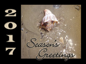More What's New in Holiday Greeting Cards This Year