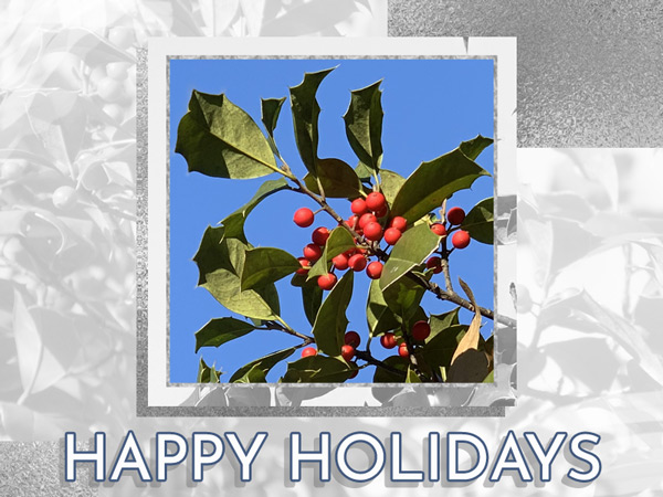 The holly that is featured on this holiday eCard is a plant we bring indoors during the shorter days of the winter holiday season.